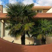 3-KaufmanJ-Palm