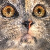 3-BloombergR-Cat Dreams