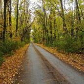 Road into autumn
