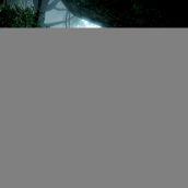 jungle fever_2-bfbc2