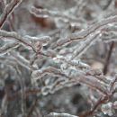 Icy Twigs