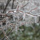 Icy Twigs 1