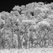Kuril Islands in the infrared