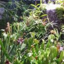 Predatory plants