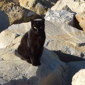Sanremo - Cat On The Rocks