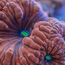 Coral ultra-macro