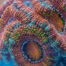 Underwater shapes