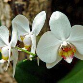 Floral Display (2)