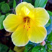 Floral Display (3)