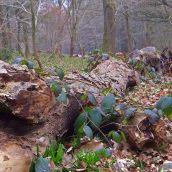 Log of Life