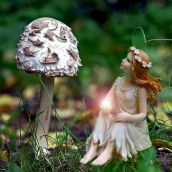 Magic Toadstool
