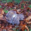 Autumn frogier