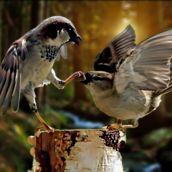 Quiet! I'm squawking!