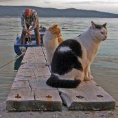 Fisherman's cats