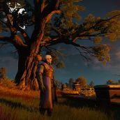 Moon in a Big Tree