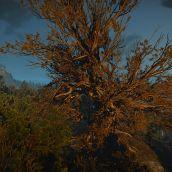 Ancient Oak & Bald Mountain Tree