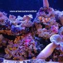 Aquarium II