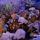 Aquarium I