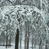 Cascade of Snow