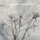 Ice Flowers II
