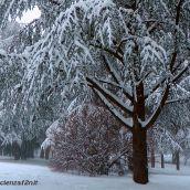 Snowy Park
