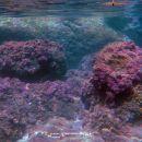 Under the Sea (III)