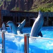 Dolphins show 1