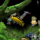 Dream Aquarium