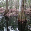 Stream Cypress