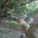 Reaching Branch
