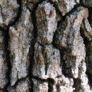 Deep Oak Bark