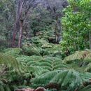 Tree Fern Canopy