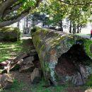 Old Redwood Log