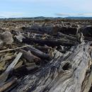 Sea of Driftwood