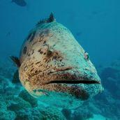 Sea ecology