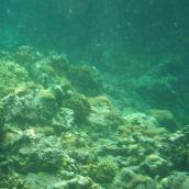 Snorkeling in Anilao - Sony Bloggie 3D Underwater