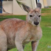 Kangaroo HD3D 1080p