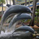 Dolphins, Daydream Island