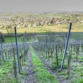 sleeping vineyard