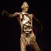 Human Body exhibition 01