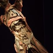 Human Body exhibition 03