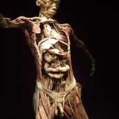 Human Body exhibition 05