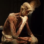 Human Body exhibition 10