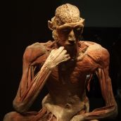 Human Body exhibition 11