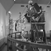 Boerhaave Museum Leiden