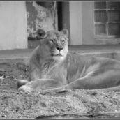 Zoo Antwerpen 3D