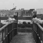 Harbour 's-Gravendeel 3D