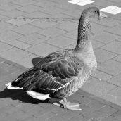 Goose Brielle 3d