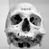 Mummy-skull London 3D
