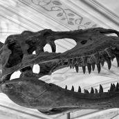 Natural History Museum London 3D